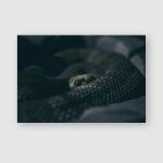 Snake Waiting Under Moonlight Poster, Pillow Case, Tumbler, Sticker, Ornament
