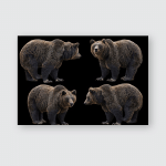 Brown Bears Portraits Set Isolated Poster, Pillow Case, Tumbler, Sticker, Ornament