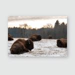 Brown Bears Ursus Arctos Lake Clark Poster, Pillow Case, Tumbler, Sticker, Ornament