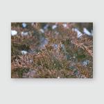Brown Branches Bush Under Snow Garden Poster, Pillow Case, Tumbler, Sticker, Ornament