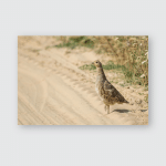 Partridge On Sandy Road Standing One Poster, Pillow Case, Tumbler, Sticker, Ornament