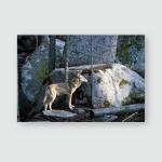 Wolf Forest National Park Sumava Czech Poster, Pillow Case, Tumbler, Sticker, Ornament