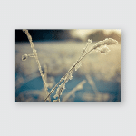 Snow Covered Branch Against Defocused Background Poster, Pillow Case, Tumbler, Sticker, Ornament