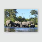 Elephant Family Crossing Chobe River Botswana Poster, Pillow Case, Tumbler, Sticker, Ornament
