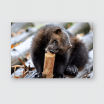 Wolverine Eating Forest During Autumn Poster, Pillow Case, Tumbler, Sticker, Ornament