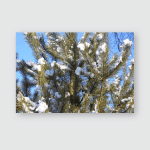Snow Ice Sticking Pine Needles Poster, Pillow Case, Tumbler, Sticker, Ornament