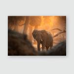 Elephant Mana Pools Np Zimbabwe Africa Poster, Pillow Case, Tumbler, Sticker, Ornament