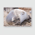 Elephant Seal On Beach Close Patagonia Poster, Pillow Case, Tumbler, Sticker, Ornament