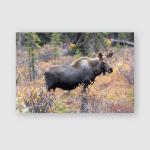 Brown Hyena Looks Around Poster, Pillow Case, Tumbler, Sticker, Ornament