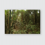 Jungle Forest Scenic Background Big Trees Poster, Pillow Case, Tumbler, Sticker, Ornament