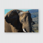 Elephants African Safari Poster, Pillow Case, Tumbler, Sticker, Ornament