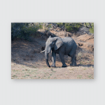 Elephants Drink Morning Pilanesberg National Park Poster, Pillow Case, Tumbler, Sticker, Ornament