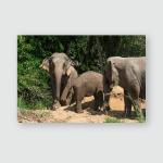 Elephants Chiang Mais Elephant Nature Park Poster, Pillow Case, Tumbler, Sticker, Ornament
