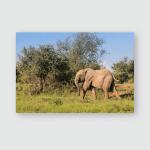 Juvenile Elephant Loxdonta Walking Peacefully Across Poster, Pillow Case, Tumbler, Sticker, Ornament