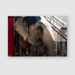 Elephants Side Face Sunshine Poster, Pillow Case, Tumbler, Sticker, Ornament