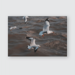 Brownheaded Gulls Pangong Lake Ladakhindia Poster, Pillow Case, Tumbler, Sticker, Ornament