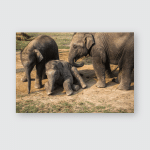Elephants On Farm Chitwan Reserve Poster, Pillow Case, Tumbler, Sticker, Ornament