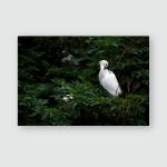 Snowy White Egret Egretta Thula Natural Poster, Pillow Case, Tumbler, Sticker, Ornament