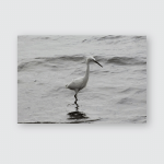 Snowy White Egret Wading Rippling Water Poster, Pillow Case, Tumbler, Sticker, Ornament