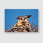 Brush Tail Possum Tree Poster, Pillow Case, Tumbler, Sticker, Ornament