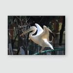 Pelican Bird Closeup View Poster, Pillow Case, Tumbler, Sticker, Ornament