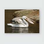 Pelican On Water Animal Shot Capturing Poster, Pillow Case, Tumbler, Sticker, Ornament