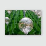 Soft Focus Decorative Light Bulbs Park Poster, Pillow Case, Tumbler, Sticker, Ornament