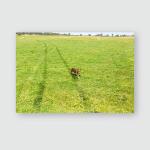 Kelpie Running Behind Vehicle On Farm Poster, Pillow Case, Tumbler, Sticker, Ornament
