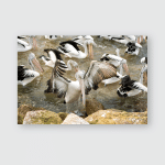 Pelican Portrait While Looking You Poster, Pillow Case, Tumbler, Sticker, Ornament