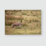 Wombat Running Through Grassland Wilsons Promontory Poster, Pillow Case, Tumbler, Sticker, Ornament