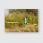 Kingfisher Perched On Branch Natural Habitat Poster, Pillow Case, Tumbler, Sticker, Ornament