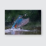 Kingfisher Diving Poster, Pillow Case, Tumbler, Sticker, Ornament