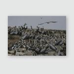 Peruvian Pelican Colony Poster, Pillow Case, Tumbler, Sticker, Ornament