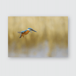 Kingfisher Hovering Common Yellow Nature Background Poster, Pillow Case, Tumbler, Sticker, Ornament