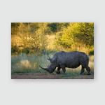 Southern White Rhinoceros Kruger National Park Poster, Pillow Case, Tumbler, Sticker, Ornament