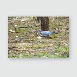 Wood Pigeon Columba Palumbus Looking Food Poster, Pillow Case, Tumbler, Sticker, Ornament