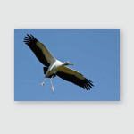 Wood Stork Coming Landing Poster, Pillow Case, Tumbler, Sticker, Ornament