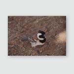 Sparrow Looking Camera Desert Poster, Pillow Case, Tumbler, Sticker, Ornament