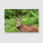 Spotted Deer Standing Looking Attentively On Poster, Pillow Case, Tumbler, Sticker, Ornament