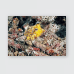 Spotted Yellow Boxfish Ostracion Cubicus Underwater Poster, Pillow Case, Tumbler, Sticker, Ornament
