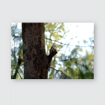 Squirrel On Tree Looking Forward Blurred Poster, Pillow Case, Tumbler, Sticker, Ornament