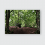 Woodland Paths Leading Off Though Trees Poster, Pillow Case, Tumbler, Sticker, Ornament
