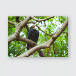 Wreathed Hornbill Barpouched Bird On Tree Poster, Pillow Case, Tumbler, Sticker, Ornament