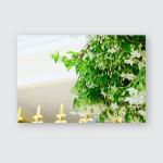 Wrightia Religiosa Has Full White Flowers Poster, Pillow Case, Tumbler, Sticker, Ornament