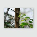 Wrightia Arborea Scientific Name Dennst Mabb Poster, Pillow Case, Tumbler, Sticker, Ornament