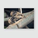 Xylorhiza Adusta Longhorn Beetles Mating Poster, Pillow Case, Tumbler, Sticker, Ornament