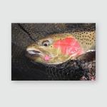 Steelhead Trout Closeup Lure Mouth Poster, Pillow Case, Tumbler, Sticker, Ornament
