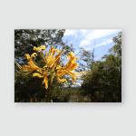 Yellow Cluster Amaryllis Autumn Sky Poster, Pillow Case, Tumbler, Sticker, Ornament