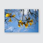 Yellow Ipe Flower Front Brasilian Blue Poster, Pillow Case, Tumbler, Sticker, Ornament