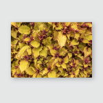 Yellow Flowers Image Which Can Be Poster, Pillow Case, Tumbler, Sticker, Ornament